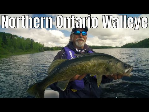 Giant Walleye In Northern Ontario | Fish'n Canada