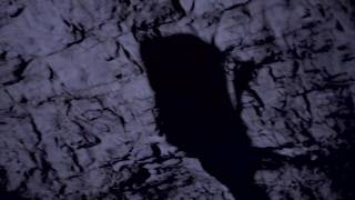NEMUER - Atmospheric Dark Folk (Neofolk) Music Channel