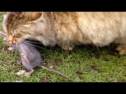 Вопрос: Что за странные мыши в доме?