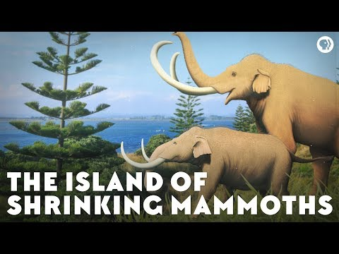 The Island Of Shrinking Mammoths