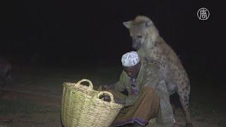 Эфиопец приручил гиен и остановил их вражду с людьми (новости)