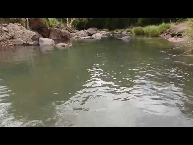 Peces del Arroyo Guerrero