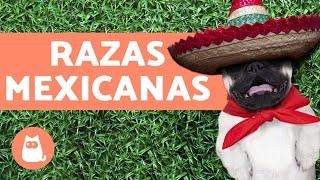 Razas de perros mexicanos existentes y extintos