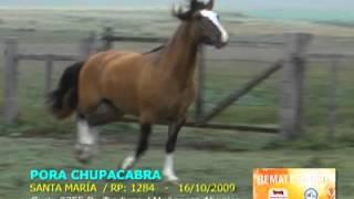 16 Pora Chupacabra