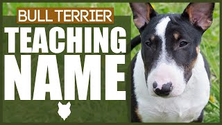 How To Teach Your BULL TERRIER PUPPY Their Name