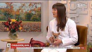 Ветеринар Вікторія Шерстюк розповіла про особливості догляду за цуценятами