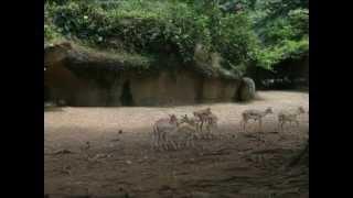 XXX animales zoologico top 100 XXX Animal XXX Zoo / / humorous and funny top 100 XXX