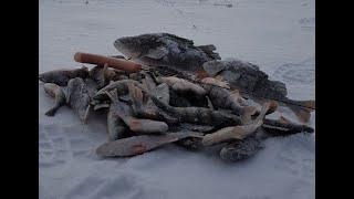 РЫБАЛКА НА ОКУНЯ ЛОВИМ ОКУНЯ НА БЛЕСНУ рыбалка зимой