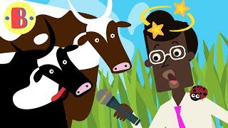 Cartoon-Comedy: Schwarze Kuh VS Brown Cow | Kurz-Cartoons
