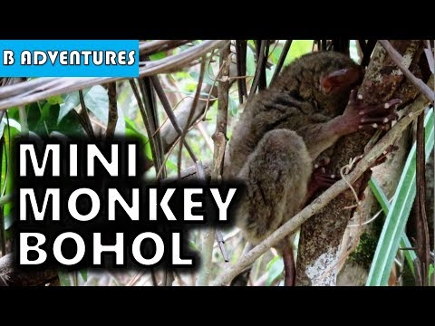 Bohol Tour: Tarsier Sanctuary, Corella, Philippines S3, Travel Vlog #82