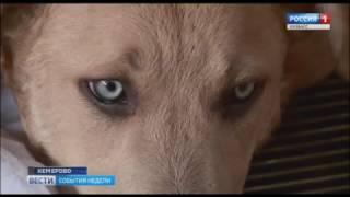 Учредитель приюта для животных «Верный» о проблеме бродячих собак