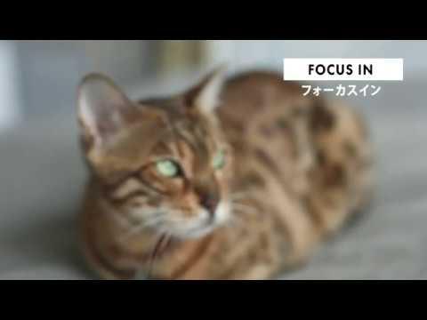 カメラワーク - FOCUS IN (フォーカスイン)   動画編集・映像制作