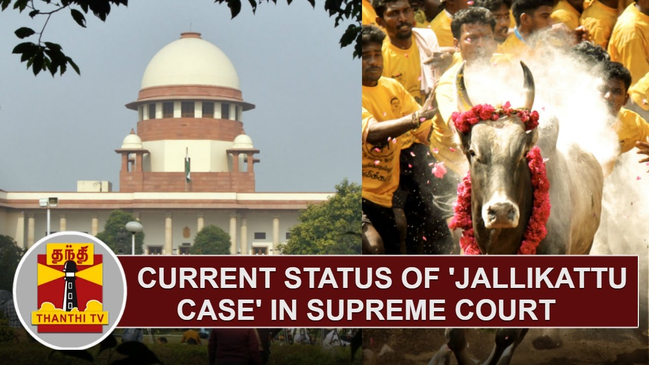 DETAILED REPORT | Current Status of 'Jallikattu Case' in ...