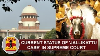 Detailed Report  Current Status Of 'jallikattu Case' In Supreme Court  Thanthi Tv