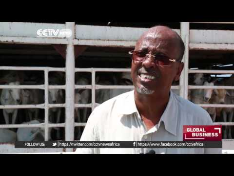 Somalia exporting animals to avoid losing them to harsh weather