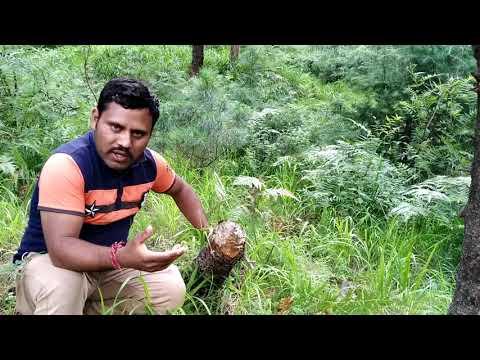 Kishtwar Kay Nagseni Forest Block Mai Green Felling Jari Hai .by DK Time