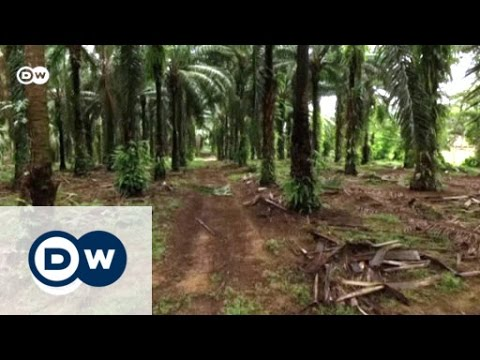 Reforestation in the 'Land of Trees'   Global 3000