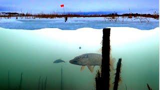 Ловля Щуки на Жерлицы с подводными камерами Подводная съемка