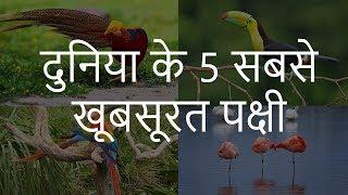 दुनिया के 5 सबसे खूबसूरत पक्षी | Top 5 Most Beautiful Birds in the World | Chotu Nai