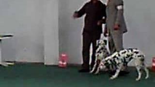 Dalmatian Show