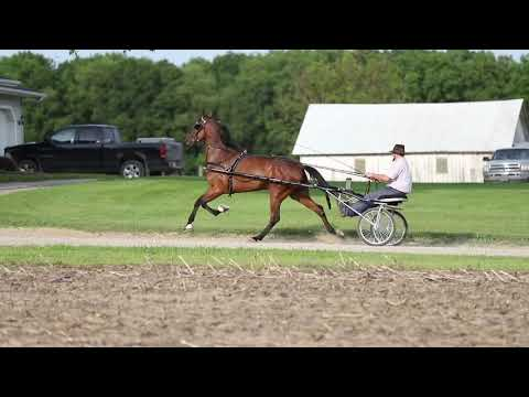 Victoria Valor. Standardbred Mare Being Offered For Sale