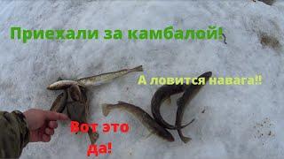 Приехали за камбалой а ловится навага Владивосток Камбала Ловим камбалу на наживку