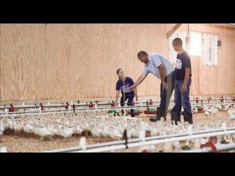 Turkey Truths: Seeing through the Myths on Factory Farms