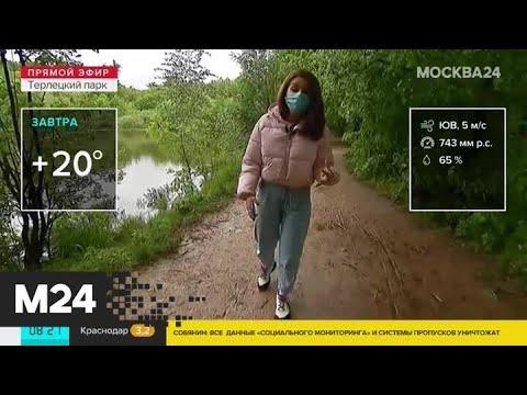 """""""Утро"""": теплая погода ожидается в столичном регионе 4 июня - Москва 24"""