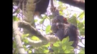 Atlas Safaris Uganda  (Spanish