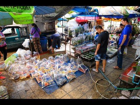[4K] 2019 Walking around the Chatuchak Fish Market, Bangkok
