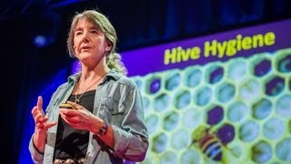 Marla Spivak: Why bees are disappearing(Honeybees have thrived for 50 million years, each colony 40 to 50000 individuals coordinated in amazing harmony. So why, seven years ago, did colonies start ..., 2013-09-17T15:16:51.000Z)