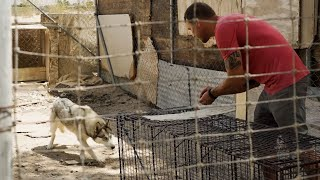 We Rescued Dogs From A Puppy Mill | Brandon McMillan
