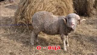 Животные .Как говорят животные. овца, корова, коза, поросенок , ослик.