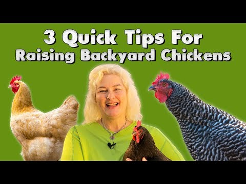 3-quick-tips-for-raising-backyard-chickens