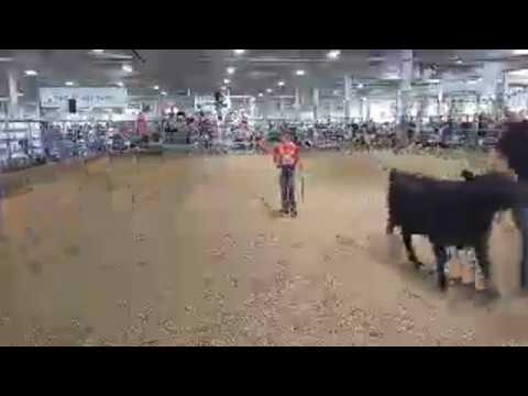 2018 Lancaster County Super Fair 4-H/FFA Beef Breeding Class