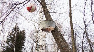 Баскетбол в деревне. 🏀