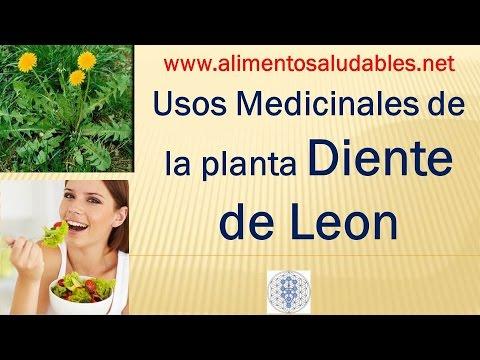 Usos Medicinales de la planta DIENTE DE LEON