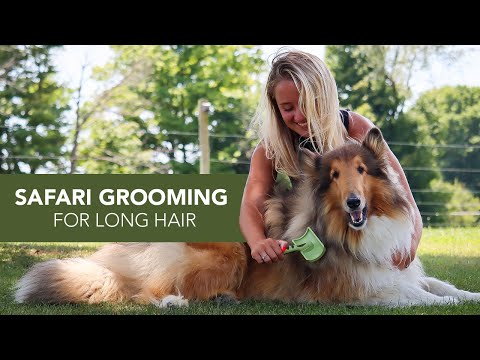 Safari® by Coastal: Grooming Tools for Long-Haired Breeds