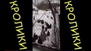 2017 Кролики живут на отгороженном участке