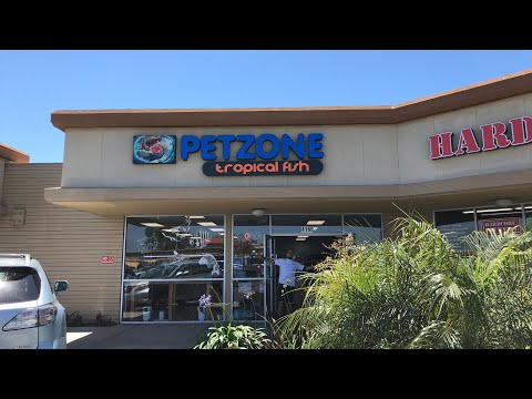 Local Fish Store Tour: Pet Zone Tropical Fish - San Diego