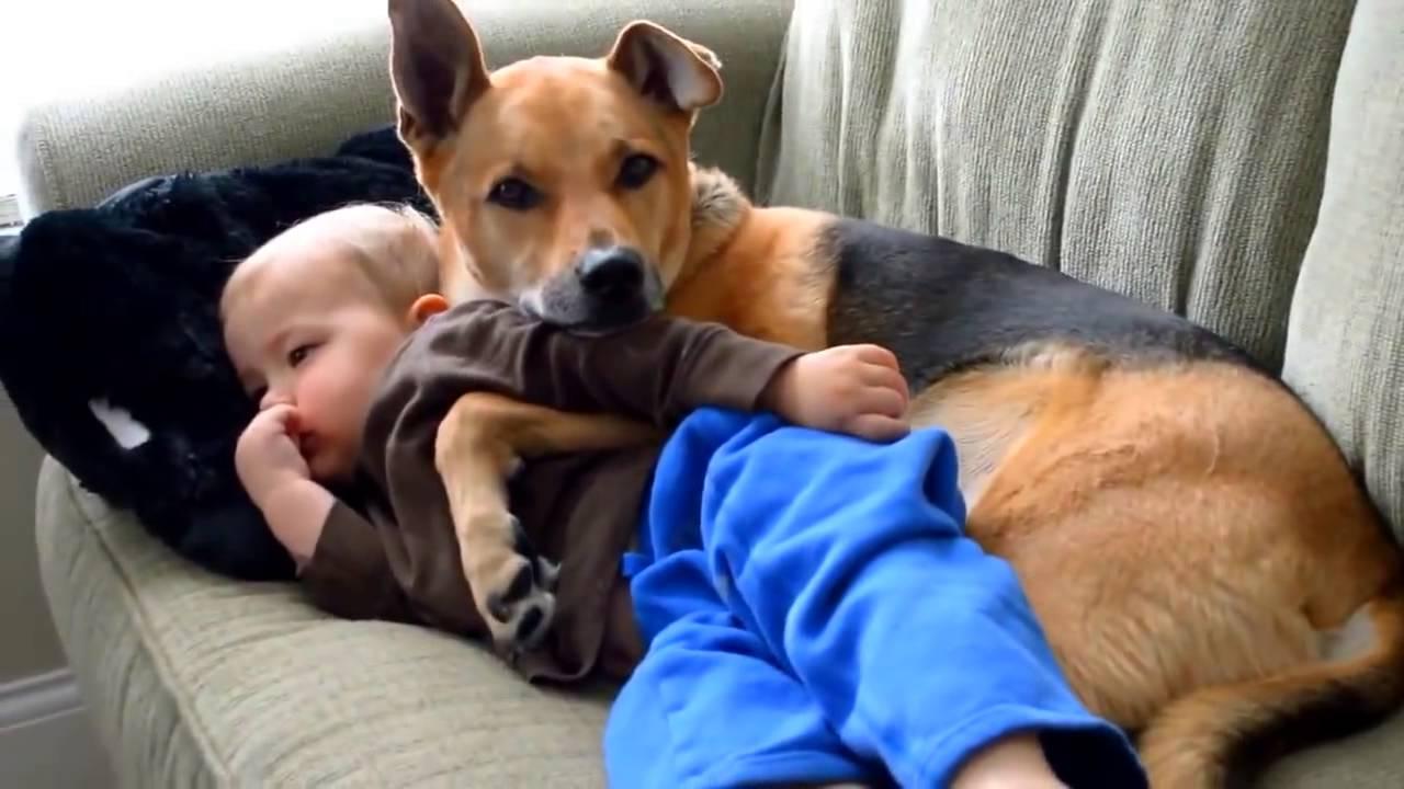 Dog Hugging A Cat
