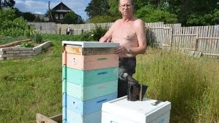 Влияние местности на активность пчел. Пчеловод Цветков А.А.