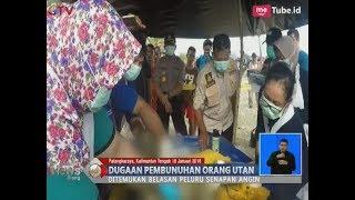 Geger!! Orangutan Tanpa Kepala Ditemukan Mengapung di Sungai Barito - BIS 19/01