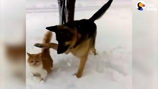 Dog Shoves Cat Into Snow
