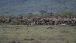 """""""Deers at Dusk"""""""