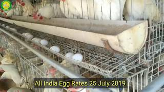 Baixar 25 July All India Egg Rates I Layer poultry farming in India I Contact for layer shed 9955111808