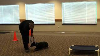 Bella (doberman) Boot Camp Obedience Training Demonstration
