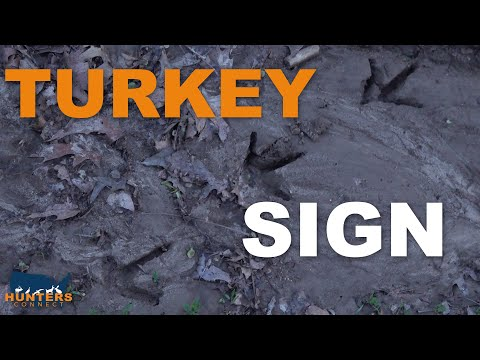 HOW TO READ TURKEY SIGN | Hunters Connect
