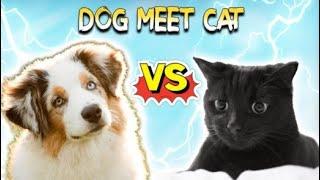 Pets love || Funny animals || từ trước đến giờ cứ nghĩ chó khôn hơn mèo cơ 😥