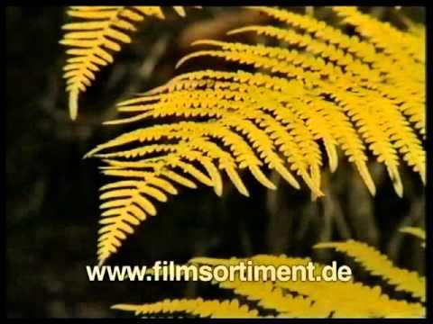 biologie botanik fortpflanzung und entwicklung bl tenloser pflanzen dvd vorschau youtube. Black Bedroom Furniture Sets. Home Design Ideas